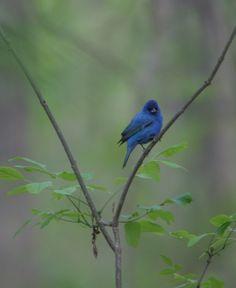 Gorgeous bird at Innsbrook.  www.innsbrook-resort.com