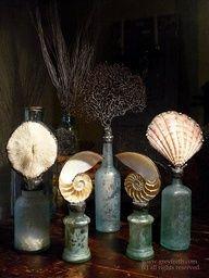 Jars, Shells & Coral / Frascos, Conchas & Coral