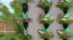 Viewer, were you looking to know how to make a plastic bottle garden? Don't worry, I will make a play list on how to make planters out of plastic bottles.Hanging Plants in Plastic Bottles Hanging Flower Pots, Hanging Plants, Diy Hanging, Plastic Bottle Crafts, Recycle Plastic Bottles, Garden Ideas Diy Cheap, Plants In Bottles, Flower Tower, Bottle Garden
