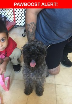 Is this your lost pet? Found in Carson, CA 90746. Please spread the word so we can find the owner!   Miniature schnauzer   Near S Avalon Blvd & San Pedro St