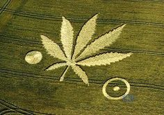 alien crop circles