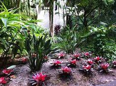"""Image result for """"botanica"""""""