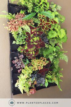 Tropical Living Wall Ideas 10