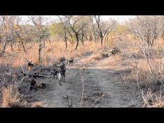 Wilddog Kids' First Outing into the Wild