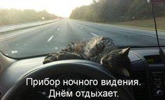 Кот - универсальное существо ))