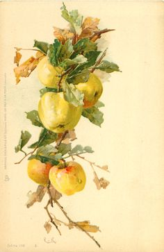 Yellow apples, Catherine Klein