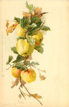 Yellow apples, Catherine Klein