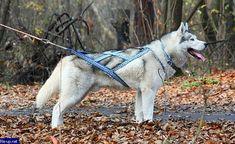 La conception populaire de X-Back qui est parfaite pour les activités de traîneau à chien, trottinette, vélo et autres tirant.  Bienvenue à WinnersWay