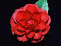 Camellia reticulata hybrid 'Black Lace'