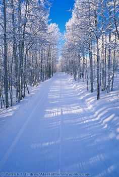 Snow covered trees along a winter roadway in Fairbanks, Alaska. I miss Fairbanks SO much!! :(