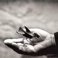 Toute la délicatesse d'un p'tit zozio dans la main de son créateur Calder.  #calder #Sculpture #Oiseau #Photonoirblanc #maeght