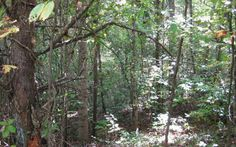 trees, trees and some more trees! This lot is the perfect opportunity to build and live in a private enviroment! all it needs is some cleaning up and you are ready to build your next dream house! For more info please contact Rick Andrews 706-970-7120 or email info@bestmountaindeals.com