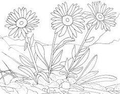 38 meilleures images du tableau fleurs de savoie flowers blueberry et botanical drawings - Coloriage fleur gentiane ...
