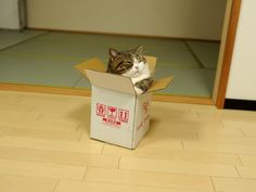 """""""Hey Maru! You are in the very small box at the beginning of the New Year. """""""