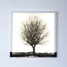 ACHICA | Duffy London - Tree White and Black, Glo Canvas, 90 x 90cm