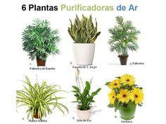 Plantas purificadoras do ar.  Saiba como fazer mais coisas em http://www.comofazer.org