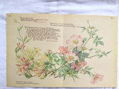 This bookplate is taken from a vintage copy of A Country Diary of an Edwardian Lady.  This page measures 14 x 9 and features Dog Roses and Honeysuckle.  Perfect for mounting and framing.  Edith Holden was born at Kings Norton, Worcester, in 1871, one of seven children of a Midlands paint manufacturer. The family lived in the small village of Olton in Warwickshire and it was there that she wrote her Nature Notes for 1906. It was first published in 1977 under the title A Country Diary of an…