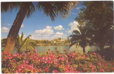 mirror lake ~ st petersburg ~ florida Across from St. Old Florida, Vintage Florida, Postcards For Sale, Vintage Postcards, New Port Richey, St Petersburg Florida, Mirror Lake, Tampa Bay Area, Florida Living