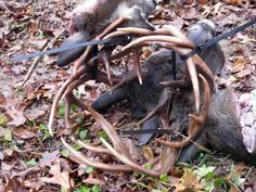 In a waist-deep pool in Ohio, nose-to-nose like fish on a stringer, floated three whitetail bucks locked together.