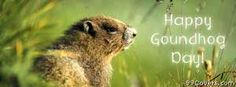 happy groundhog day Facebook Cover