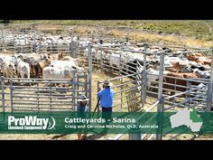 Priefert Large Cattle Working Systems - YouTube