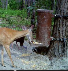 Gravity deer feeders