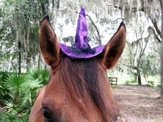 Purple Mini Witch Hat for Horses  Equine Witch by MyBuddyBling