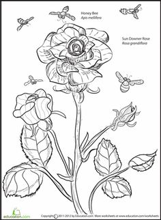 rose and bee coloring page