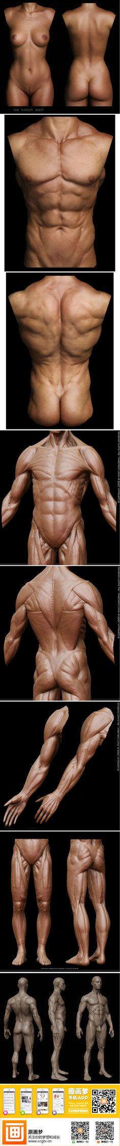 boceto cuerpo humano. Referencia del libro Anatomía para el artista ...