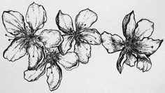 Cherry blossoms, delicately and serenely floating.    Pen on acid-free 98lb. paper, black matting. 9in. by 12in, including mat.