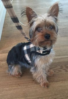 Black and Tan Plaid Small Dog Harness Made in USA