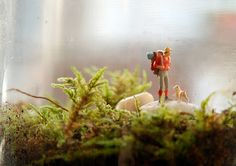 thepeagreenboat_TwigTerrariums_15