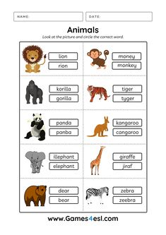 These animal worksheets can be download for free. These animal worksheets are for kids and beginner ESL students to learn about the names of animals in English. Download and use in class today. Esl Worksheets For Beginners, Animal Worksheets, Pet Names, Animals, Names Of Animals, Animales, Animaux, Animal, Animais