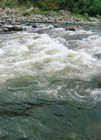 A la altura de Pitalito, en el Alto Magdalena, la corriente baja con gran fuerza.