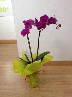 Orquídea. Disfruta de un 5% de descuento en cualquiera de tus pedidos durante el mes de agosto. #oferta #códigodescuento #regalaflores