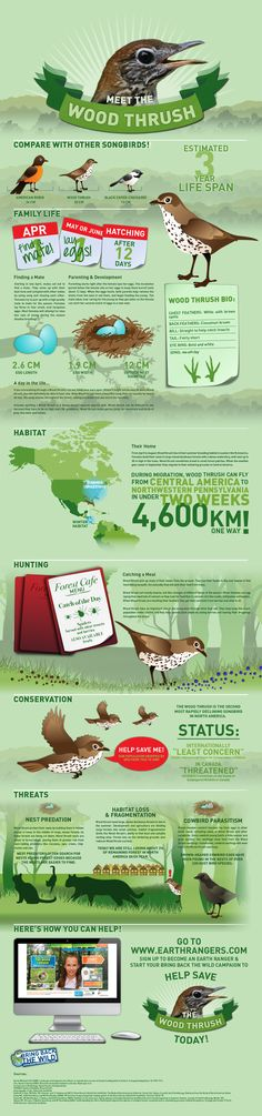 Wood Thrush Infographic