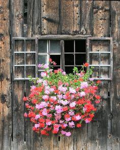 Window - Montafon, Austria Weathered Wood, Austria, Yard, Windows, Balconies, Flowers, Photography, Beautiful, Europe