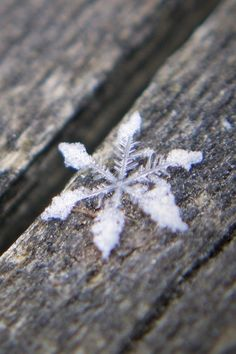 snow flake, unique, wood, winter :-)