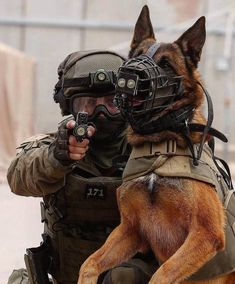 Working dogs ​have natural talents that are carefully honed with intensive training to perform jobs that help humans. Military Working Dogs, Military Dogs, Police Dogs, Military Personnel, Military Army, Malinois Dog, Belgian Malinois, War Dogs, American Soldiers