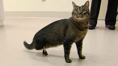 The cat with 3D-printed legs and other tech news - BBC News