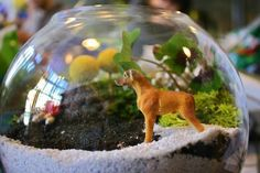 I love my terrarium! Here are 25 options for those of you who'd like to build one, too!