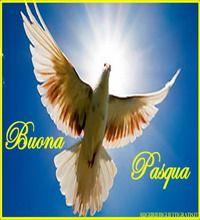 biglietti di auguri di pasqua con colomba su sfondo azzurro