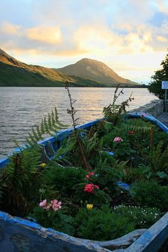 The boat garden, Connemara
