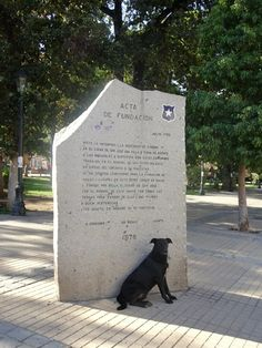Stray dog guarding the sign in San Jose de Maipo, Chile - Global Introvert