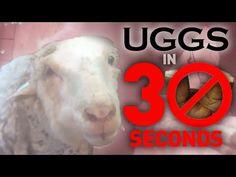 How UGGs Are Made | Take Action | peta2.com