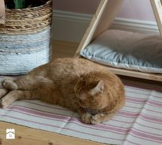 Jak zrobić legowisko z drapakiem dla kota w stylu boho? DIY
