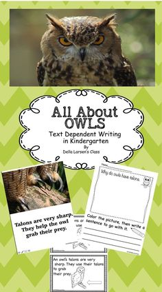 Owls! Text dependent writing in kindergarten. This packet is designed to teach your students all about owls through beautiful photo cards. The cards connect to text dependent writing prompts. Bonus Printable take home book