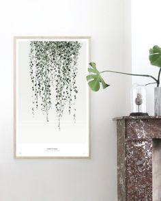 Lovely Botanics String of Pearls