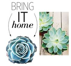 """""""Bring It Home: Succulent Cushion"""" by polyvore-editorial ❤ liked on Polyvore"""