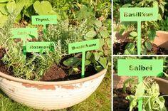 Kräuterkunde - Google-Suche Kraut, Google, Plants, Sage, Medicinal Plants, Search, Flora, Plant
